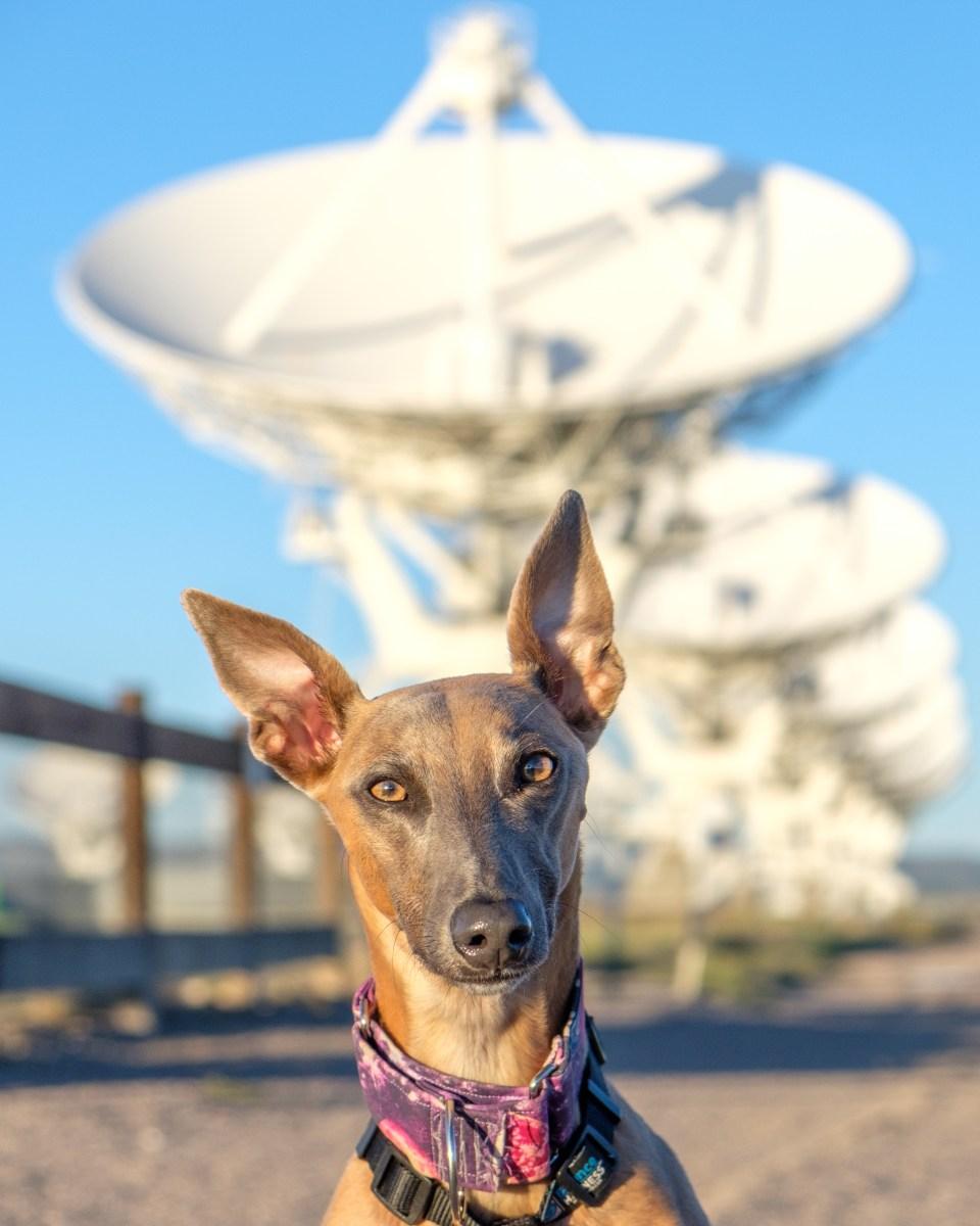 Kuiper poses with a row of VLA antennas.