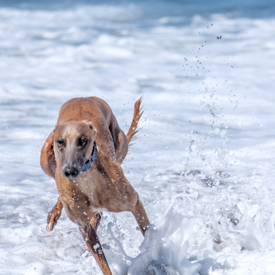"""Kuiper splashes in the ocean. The waves look kind of like the """"milk"""" in Westworld."""