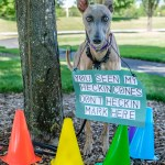 "Kuiper ""reserves"" a tree with traffic cones. He holds a sign which says, ""You seen my heckin cones. Don't heckin mark here."""