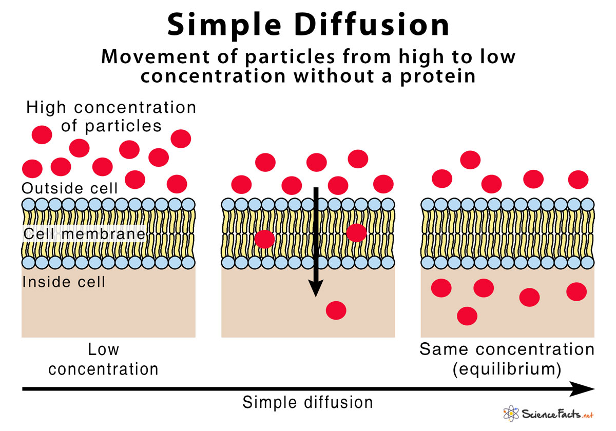 Simple Diffusion Definition With Examples And Diagram