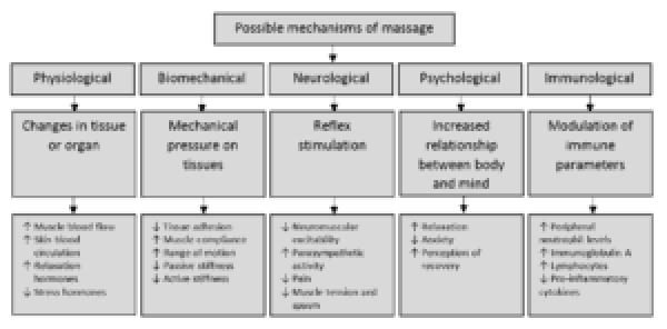 figure-1-possible-mechanisms-of-massage