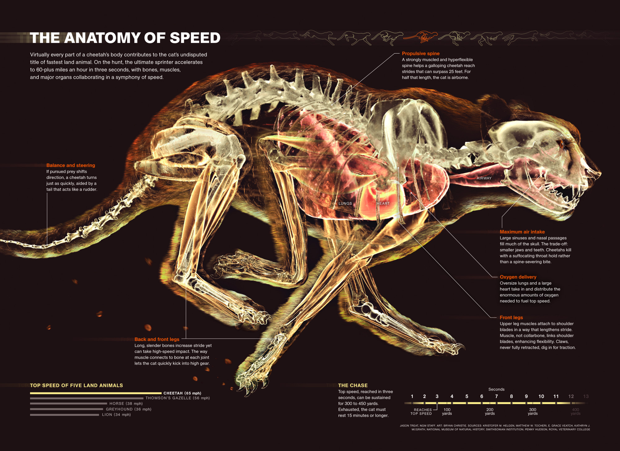 horse respiratory system diagram genie intellicode receiver wiring show not tell the rise of infographic science friday