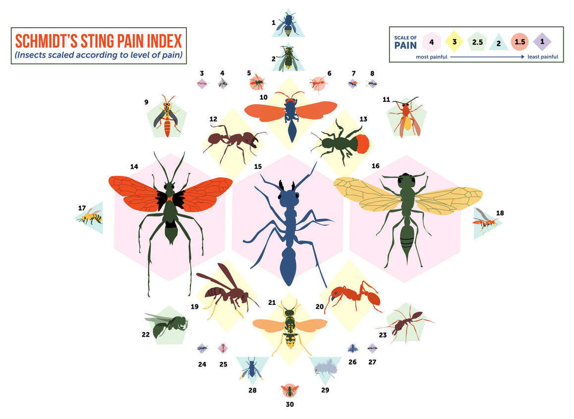 From 'Nettles' to 'Volcano' a Pain Scale for Insect ...