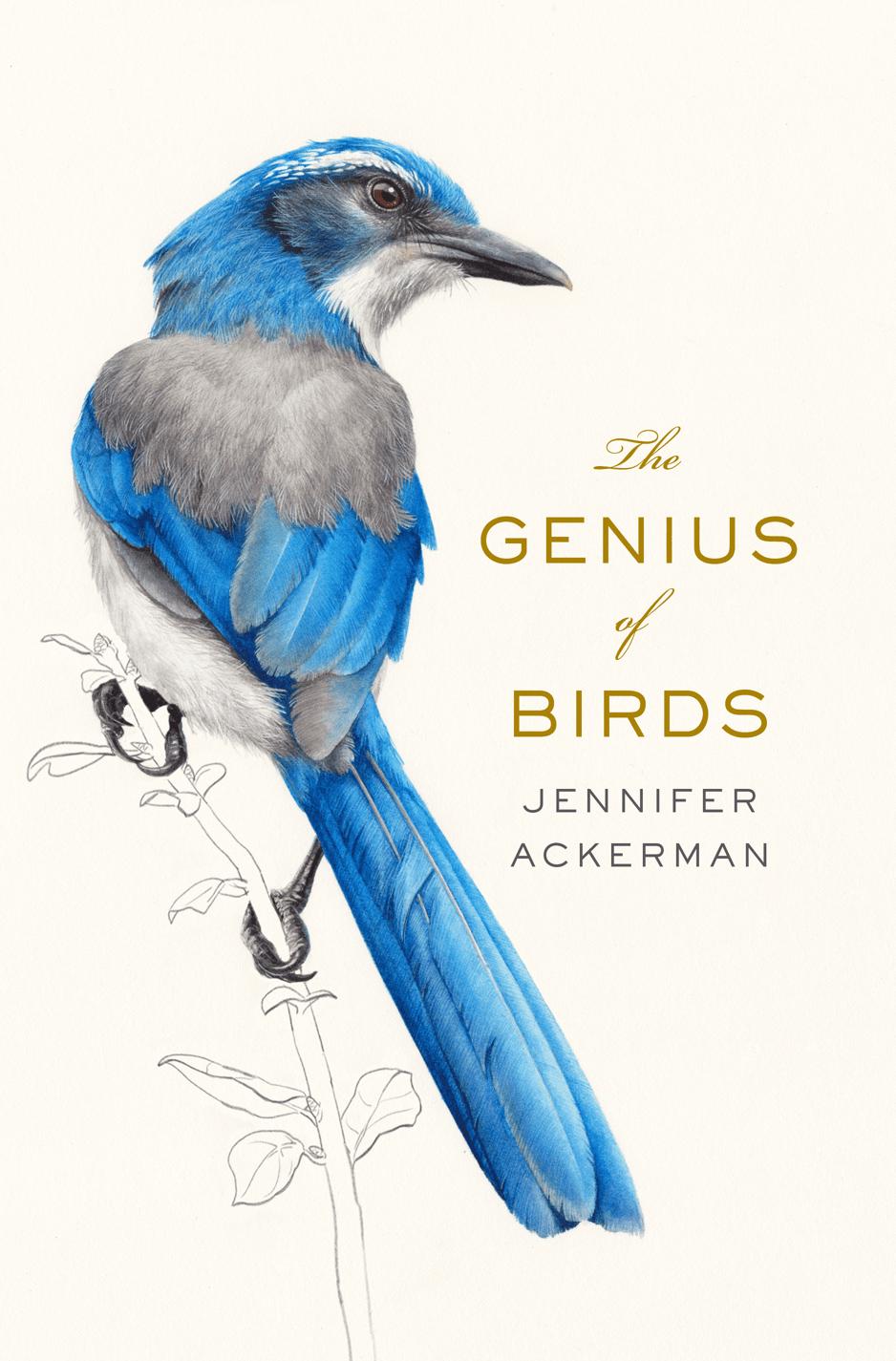 genius-of-birds-cover