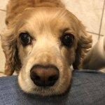 Puppy Eyes Dogs Secret People Manipulation Weapon