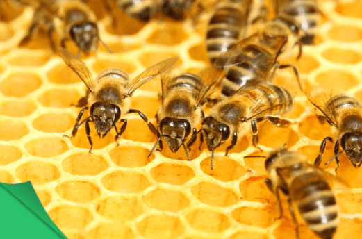 Why Are Honeycomb Cells Hexagonal?