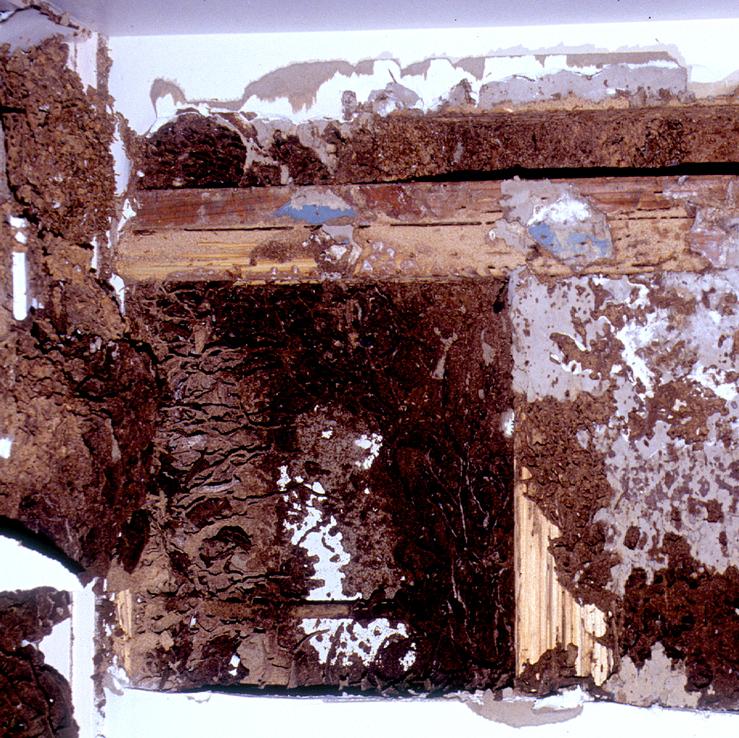 Termite Damage To Hardwood Floors