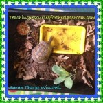 Eastern Box Turtle Our New Addition