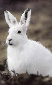 fun hare facts for