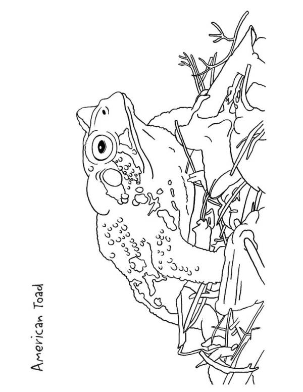toad coloring pages # 16