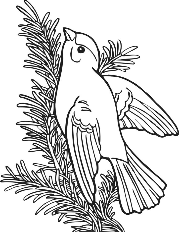 Free coloring pages of 3rd grade sheets