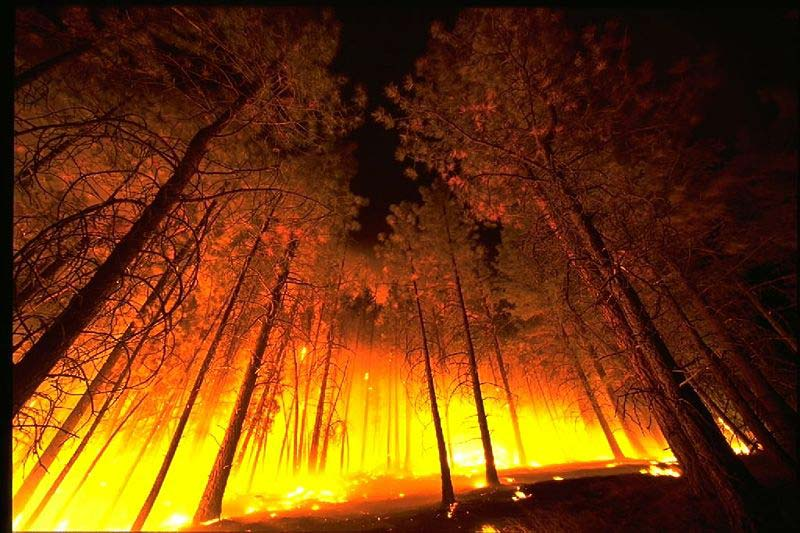 This photo shows a unique angle of a raging forest wildfire as the flames rip though the trees, creating intense heat and a deep glow.