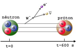 Proton and Neutron