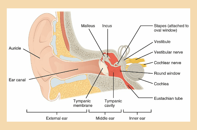 Why Do Our Ears Pop: The Science Behind Popping Ears Become A Pro at Popping Your Ears and Understanding Why We Do That