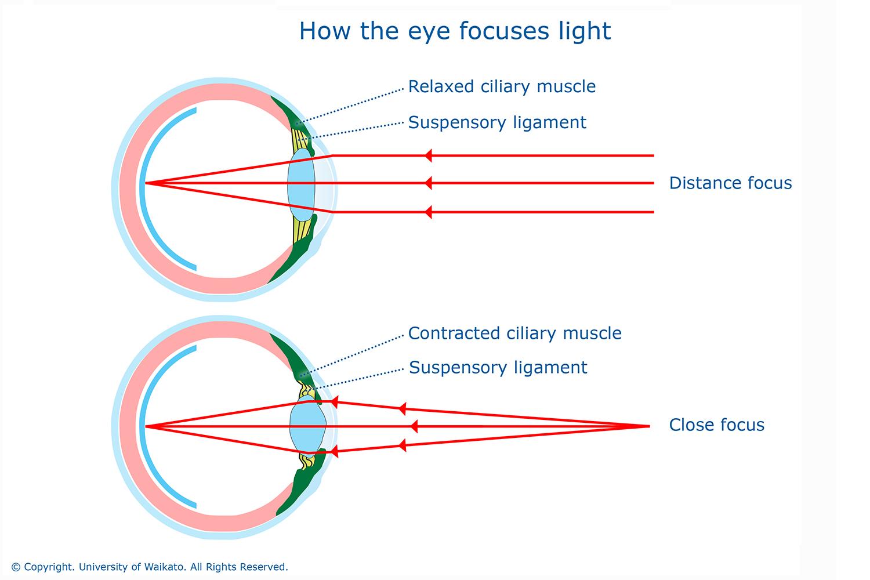 human eye diagram without label [ 1500 x 1000 Pixel ]