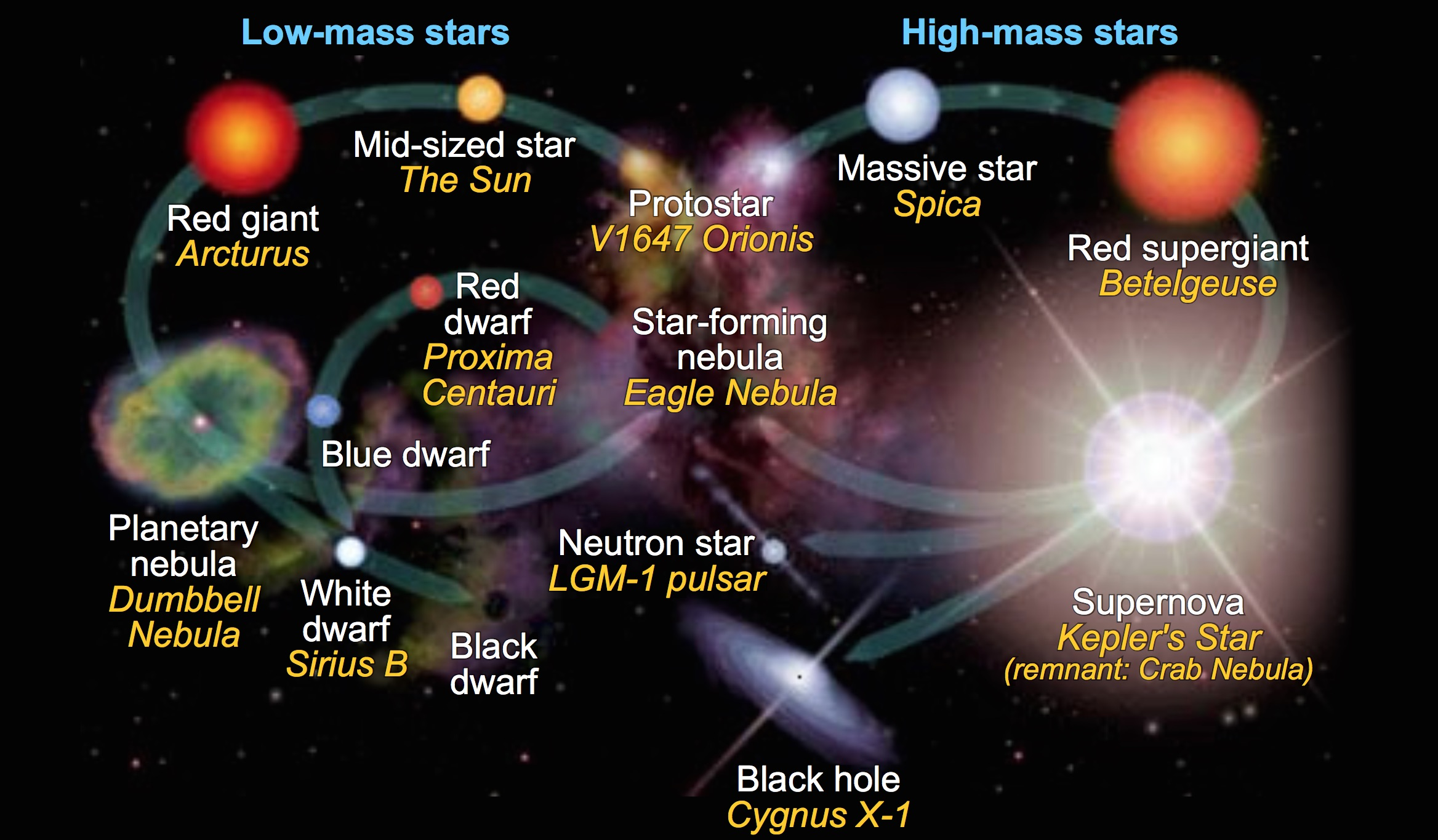 diagram of a low mass star life cycle husqvarna 455 rancher parts big bang theory science learning hub article questions
