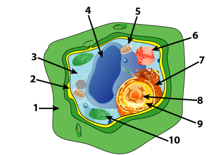 Plant cell parts and functions interactive tutorial plantcellnumbered the cell wall ccuart