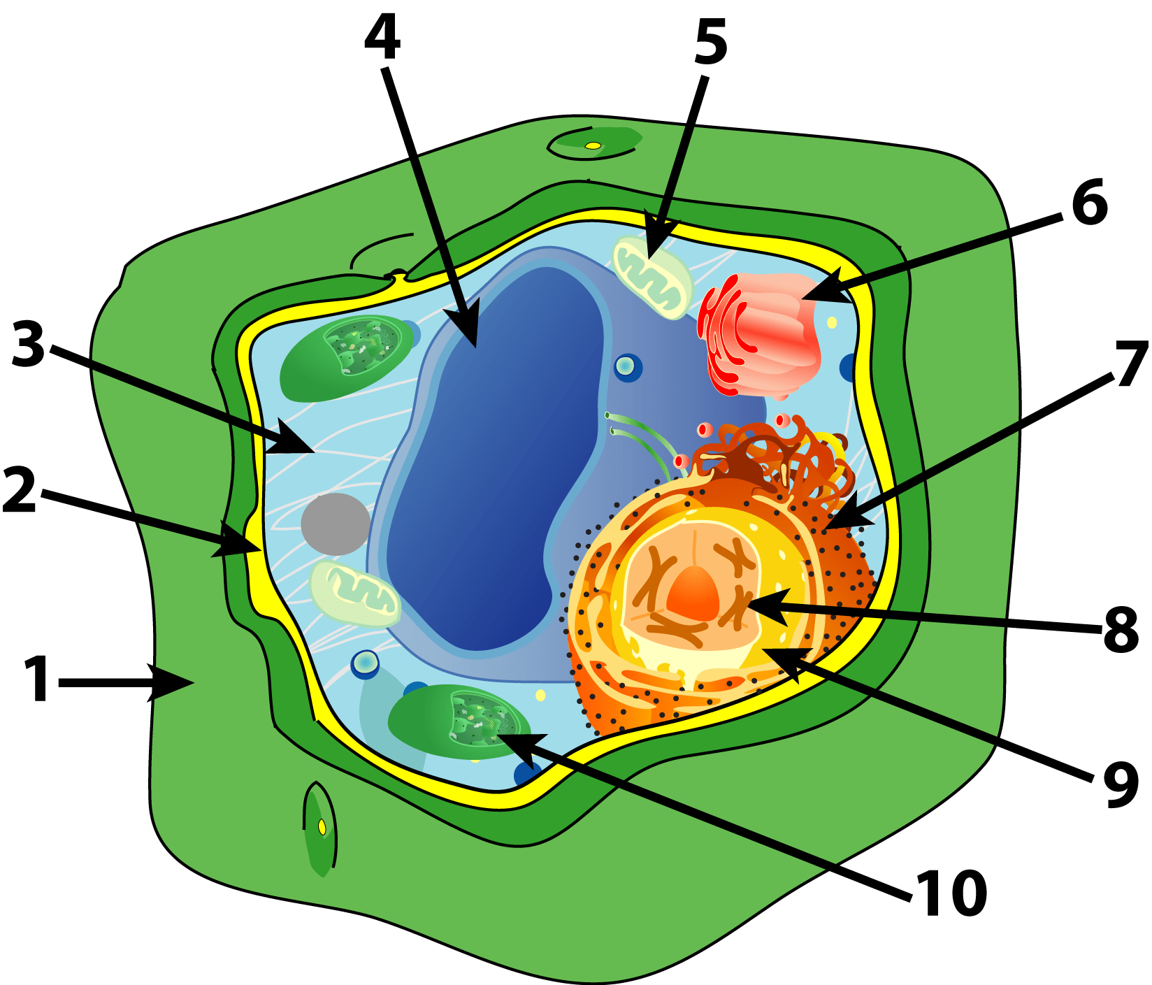 hight resolution of plant cell parts quiz sciencemusicvideos