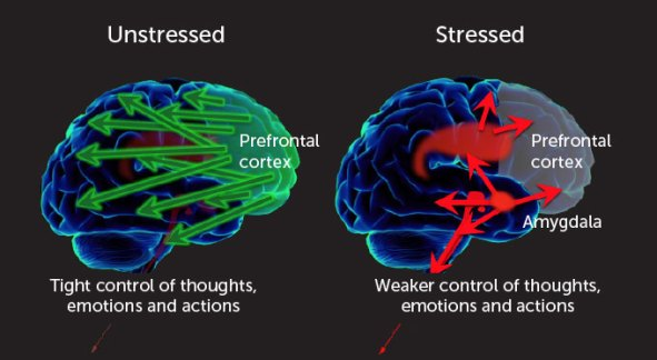 Pandemic Effects of Stress