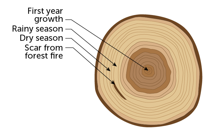 a diagram showing tree rings and corresponding events