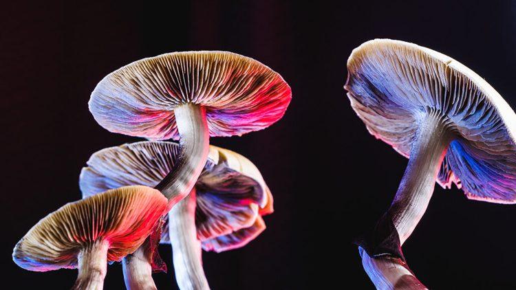 hallucinogenic mushrooms