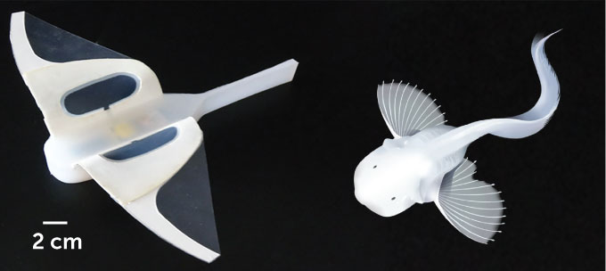 robot and snailfish side by side