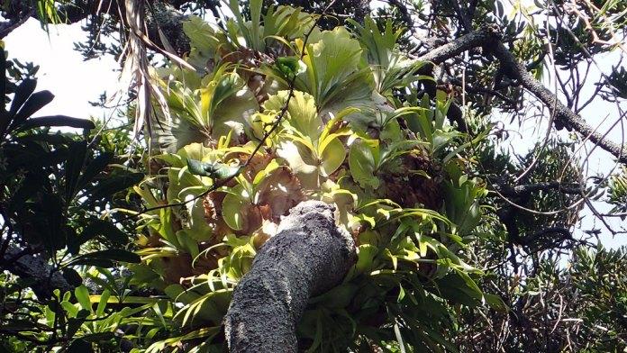 bir ağaç gövdesi üzerinde eğrelti otu kolonisi