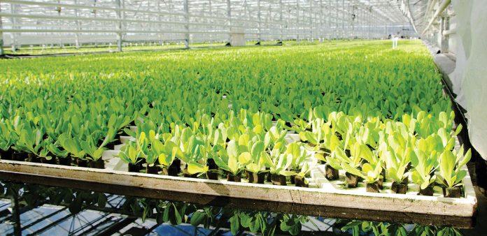 büyük bir serada kutularda bitkiler