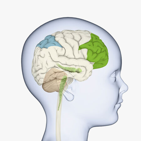 a diagram showing the location of the prefrontal cortex