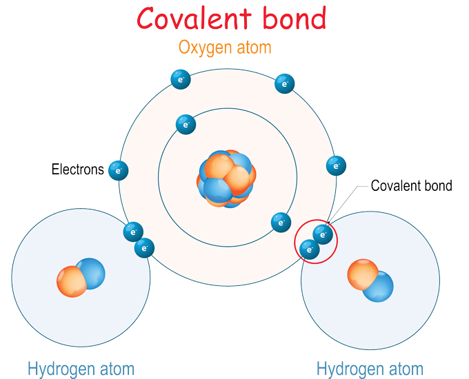 an illustration of a water molecule showing covalent bonds