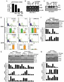 Smurf2-mediated degradation of EZH2 enhances neuron