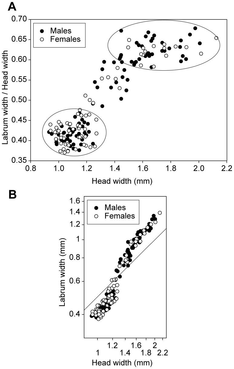 Developmental Pathways of Psammotermes hybostoma (Isoptera