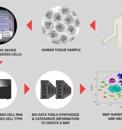 the process shown here which can sort and categorize 5 000 cells per second at very low cost illustrates the power of single cell genomics  [ 1179 x 835 Pixel ]