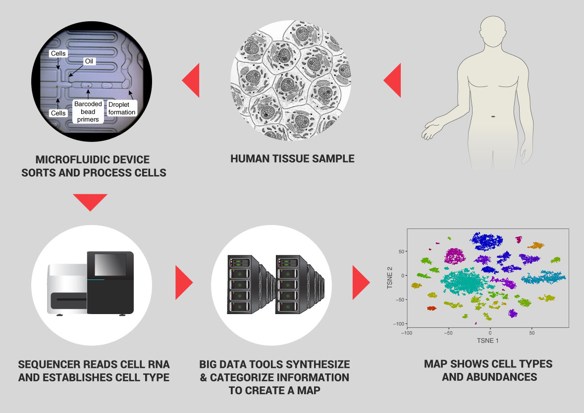 hight resolution of the process shown here which can sort and categorize 5 000 cells per second at very low cost illustrates the power of single cell genomics
