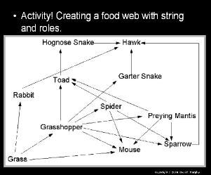 Science Ecology Unit / Lessons PowerPoint for Educators