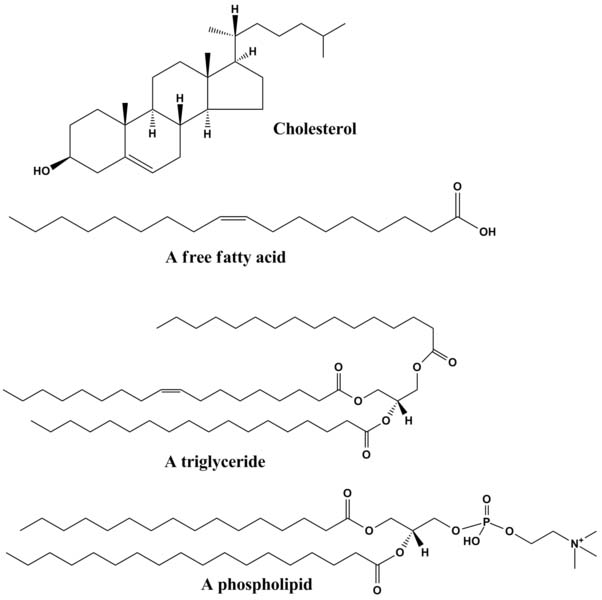 Chemical Diagrams of Lipids and Phospholipids