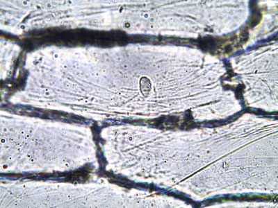 General Biology Microscopic Specimen Images  Photographs