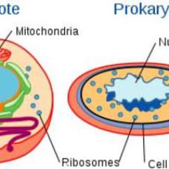 Microbiology Prokaryotic Cell Diagram Labeled 1157 Bulb Wiring Parts Functions Illustration Of Eukaryotic And Biological Cells