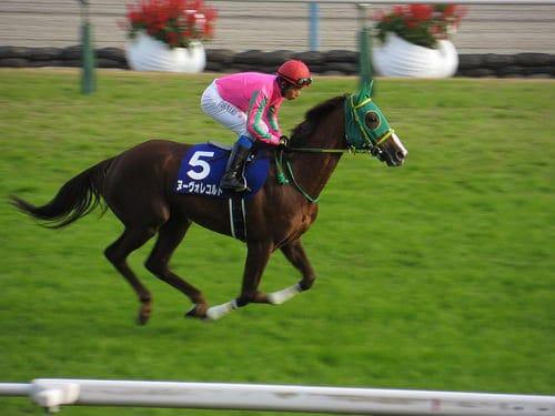 horse_race3