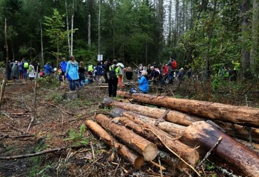 Des militants s'opposent à l'abattage d'arbres dans la forêt de Bialowieza, le 13 août 2017 en Pologne (AFP - JANEK SKARZYNSKI)