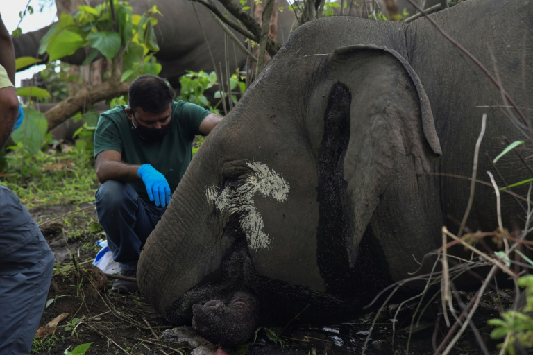A veterinarian examines the remains of an elephant in the jungles of the state of Assam on May 14, 2021 in Nagaon, India (AFP - Biju BORO)