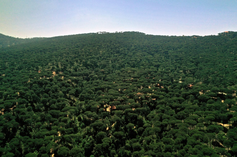 Pine forest in the village of Bkassine, 14 May 2021, south of Beirut, Lebanon (AFP - JOSEPH EID)
