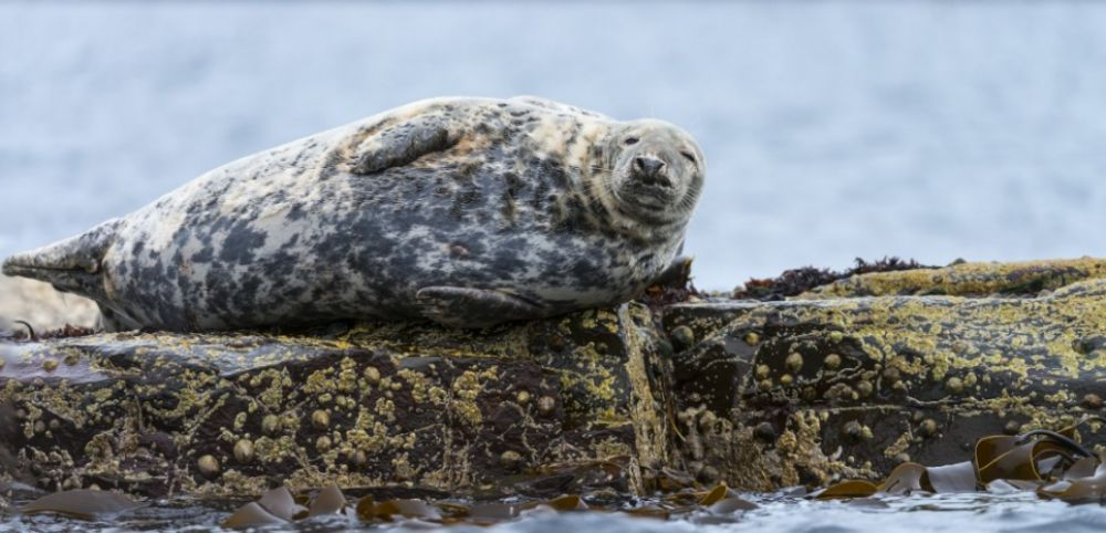 Comment les phoques aident  protger les ocans  Sciences et Avenir