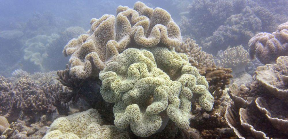 Une manipulation gntique pourrait sauver le corail  Sciences et Avenir