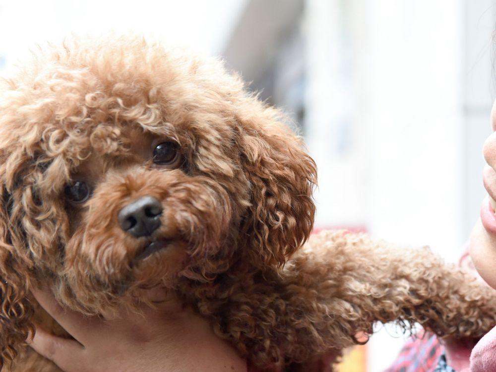 VIDEO Dmangeaisons du chien  quand fautil consulter un vtrinaire   Sciences et Avenir
