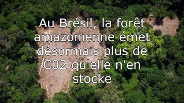 Forêt amazonienne et consanguinité : l'actu des sciences