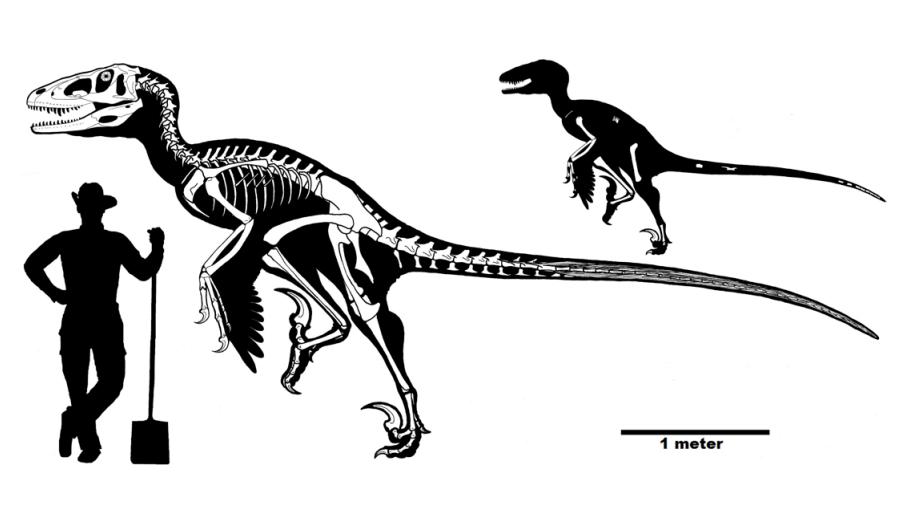 Dakotaraptor : voici le plus grand rapace du monde