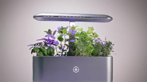 캡슐형 씨앗을 기기 안에 심고 물을 붓기만 하면 자동으로 식물을 키워주는 AVA 바이트의 스마트 화분. ⓒ youtube.com : AVA Byte