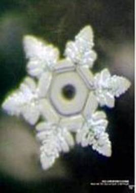 masaru emoto water