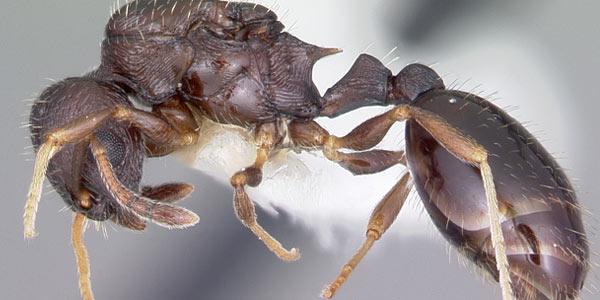 bug zwarte lul gratis porno volwassen Milfs